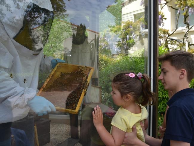 la-ruche-de-mary-st-andré-de-le-marche (2
