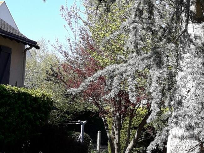 location-chambre-loire-montjean-fleur-glycine (8)