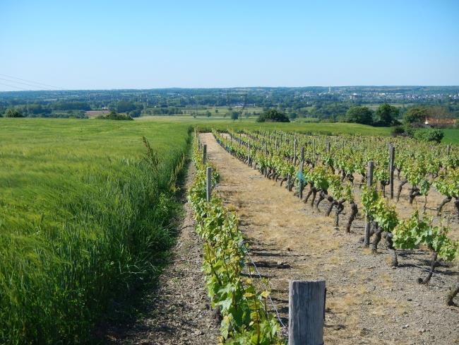 randonnee-vignes-moulins-mesnil-en-vallee (7)
